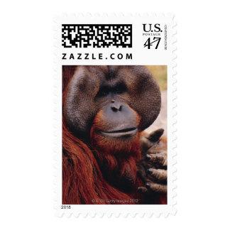 Orangután Sellos Postales
