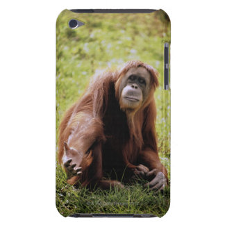 Orangutan sitting on grass and looking at camera barely there iPod cover