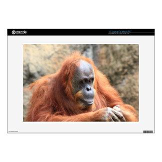 Orangutan Skins For Laptops