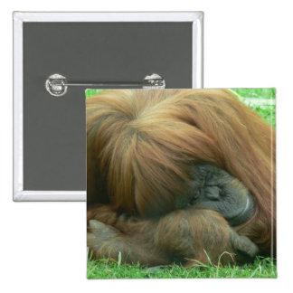 Orangutan Snoozing Square Button