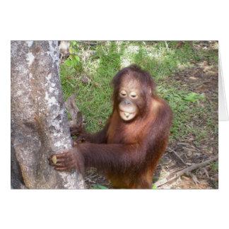 Orangutan Songs Wildlife Charity Card