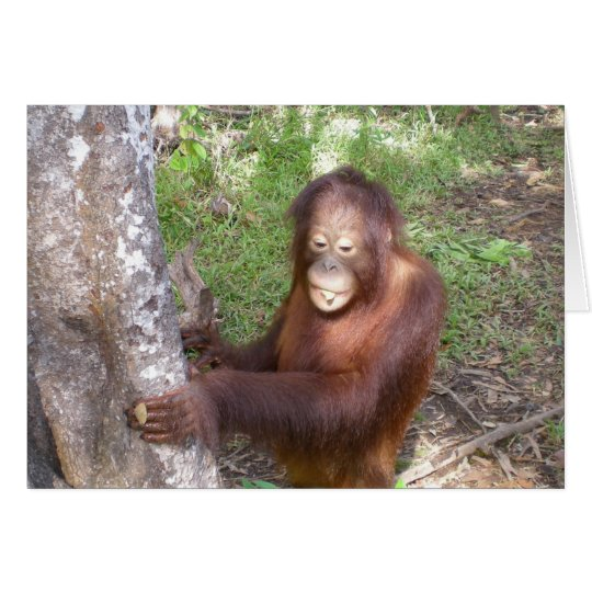 Orangutan Songs Wildlife Charity Card