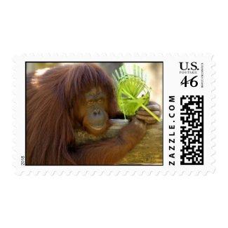 Orangutan Stamp stamp