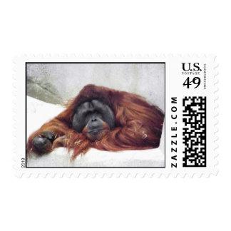 Orangutan Stamp
