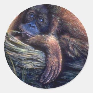 Orangutan study stickers