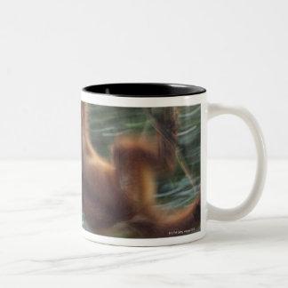 Orangutan Swinging on Liana 2 Two-Tone Coffee Mug