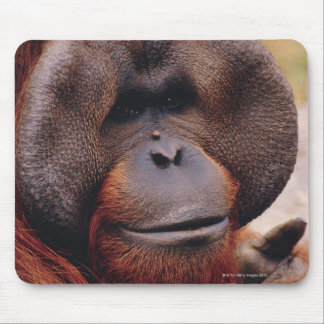 Orangután Tapetes De Raton