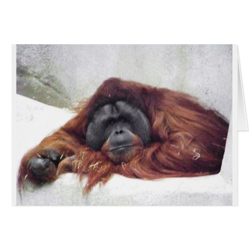 Orangután Tarjeta De Felicitación