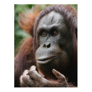 Orangután Tarjeta Postal