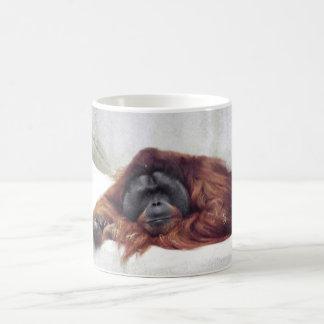 Orangután Taza Básica Blanca