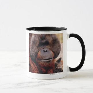 Orangután Taza