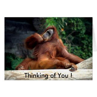 orangUtan, Thinking of You ! Card