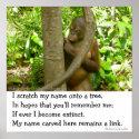 Orangutan Tribute print