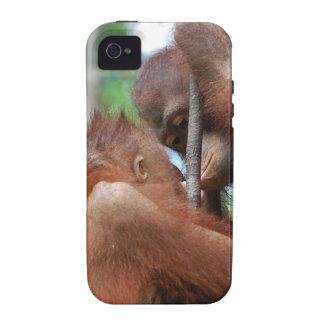 Orangutan Wildlife Kisses iPhone 4 Cover