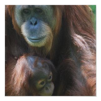 "Orangutan with Baby Invitations 5.25"" Square Invitation Card"