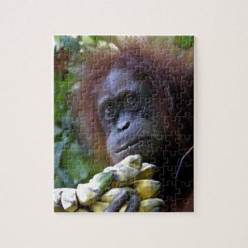 Orangutan with bananas Sumatra Puzzles