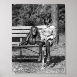 Orangután y muchacho - parque zoológico nacional póster