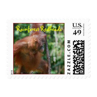 Orangutanes del Redhead de la selva tropical Envio