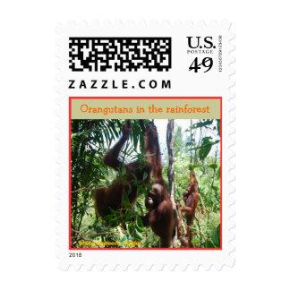 Orangutanes en la selva tropical sello
