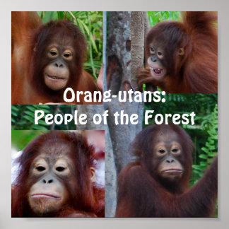 Orangutanes Póster