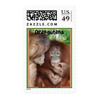 Orangutanes: Princesa Gets Treats Envio