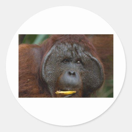 Orangutang Classic Round Sticker