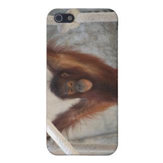 Orangutang Juvenile Playing iPhone SE/5/5s Case