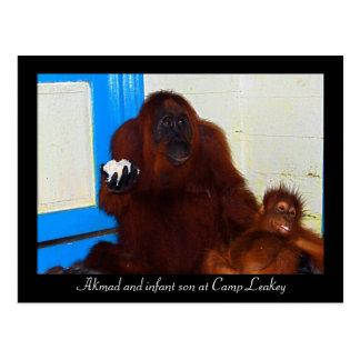 Orangutans at Camp Leakey Postcard