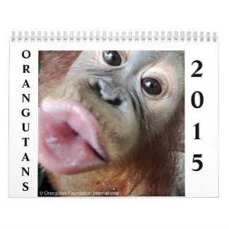 Orangutans Wall Calendars