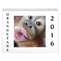 Orangutans in Rainforest Calendar