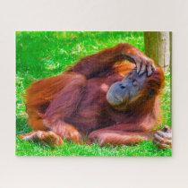 Orangutans. Jigsaw Puzzle
