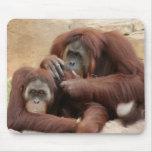 Orangutans Mouse Pads