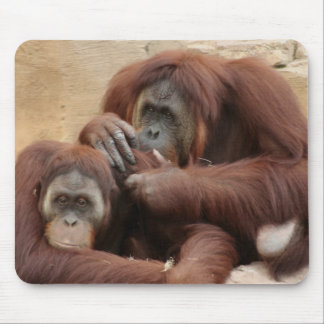 Orangutans Mouse Pad