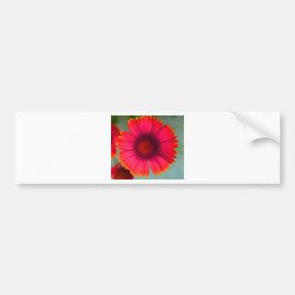 Orangy-pinky daisy car bumper sticker