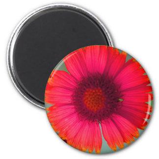 Orangy-pinky daisy magnet