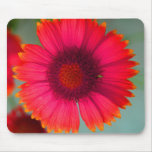 Orangy-pinky daisy mouse pads