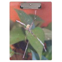 Orb Spider Clipboard