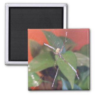 Orb Spider Magnet