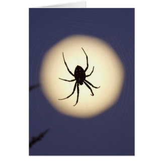 Orb spider on web with full moon, in south greeting card
