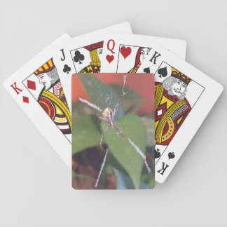 Orb Spider Playing Cards