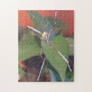 Orb Spider Puzzle