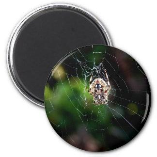 Orb Weaving Garden Spider 2 Inch Round Magnet
