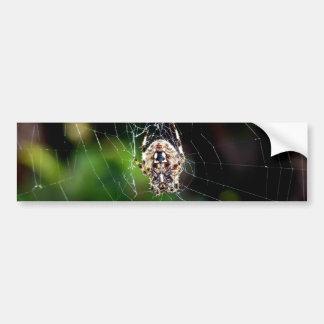Orb Weaving Garden Spider Car Bumper Sticker
