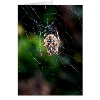 Orb Weaving Garden Spider Greeting Card