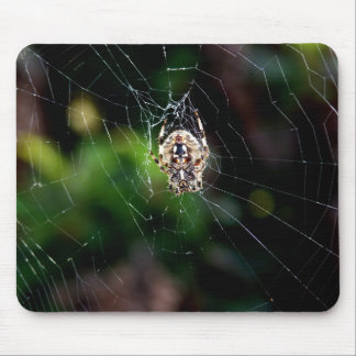 Orb Weaving Garden Spider Mouse Pad