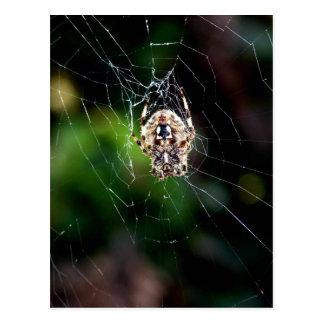 Orb Weaving Garden Spider Postcard