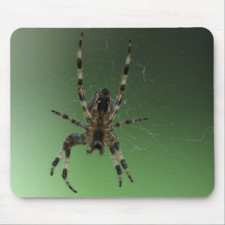 Orb World Wide Web Spider Mousepads