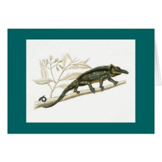 Orbigny - Chameleon - Chamaelo sp Card