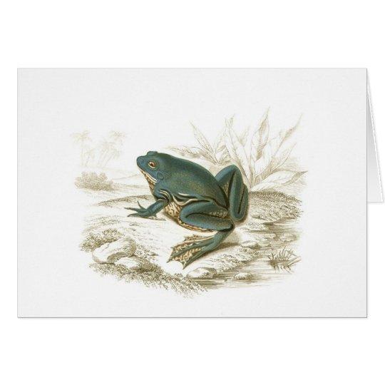 Orbigny - Frog - Pseudis merianae Card