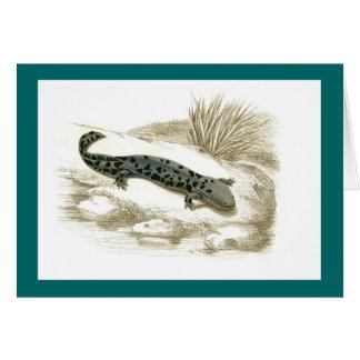 Orbigny - Salamander - Menopoma alleghnensis Card